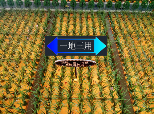 北京四维云尚模型--智能农业沙盘